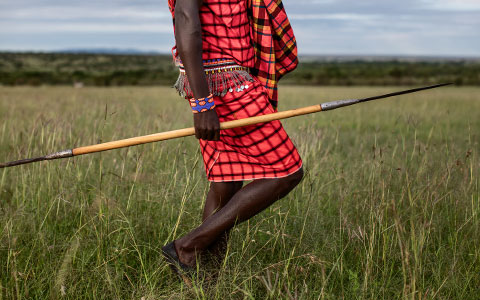 How the Massai milk lion